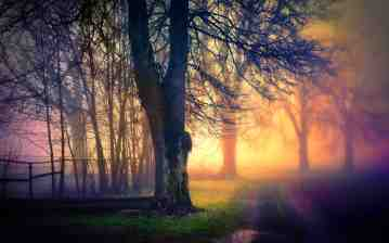 morning-fog-69878